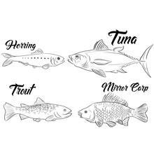 Mirror Carp Herring Tuna Trout  Fishes  Vector Illustration