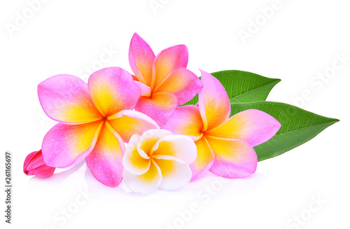 Foto op Canvas Frangipani frangipani flowers with leaf isolated on white background