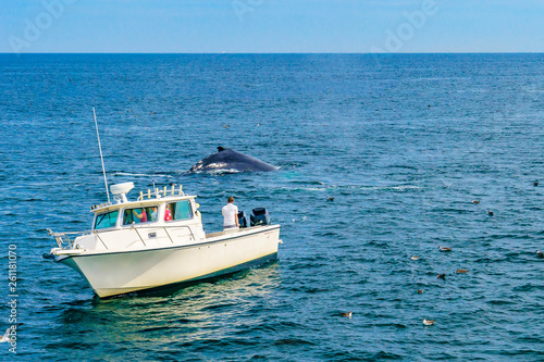 Boat and whale, Cape Cod, Massachusetts, US Wallpaper Mural