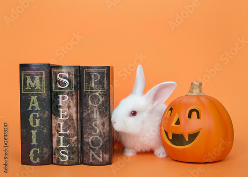 Fotografie, Obraz  Adorable white albino baby bunny sniffing at magic, spells and poisons books with a Jack-o-lantern on the other side