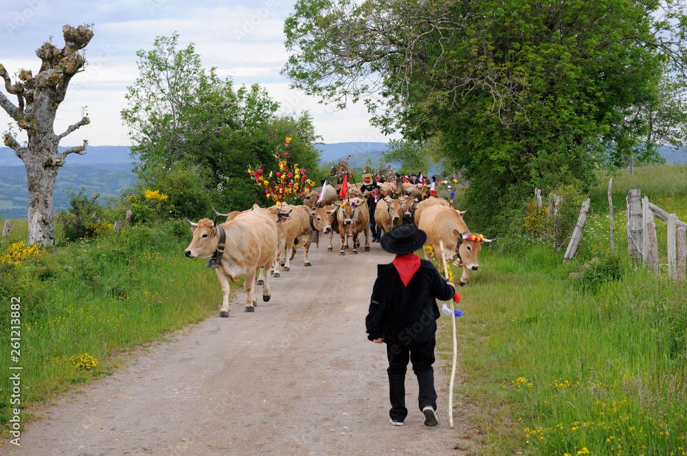 Fototapety, obrazy: Transhumance des troupeaux sur l'Aubrac