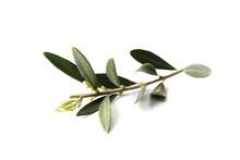 Fresh Olive Leaves On White Ba...