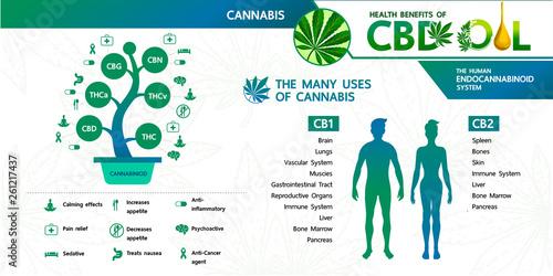 Fotografía  Cannabis benefits for health vector illustration.