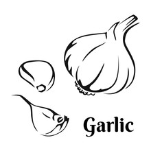 Garlic Black And White Image. ...