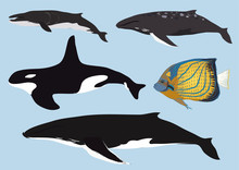 Set Of Vector Whales And Fish. Vector Illustration Of Marine Mammals