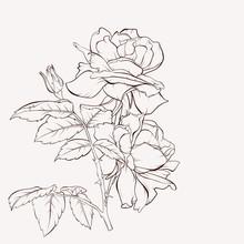 Vector Rose Flower. Summer Flo...
