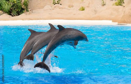 Foto op Plexiglas Dolfijnen Jumping dolphins at animal park.