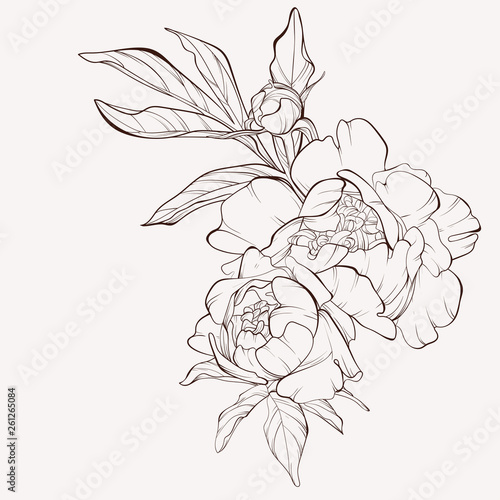 Photo Peony flower and leaves drawing