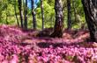 canvas print picture - Spring dream