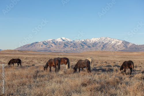 Wild Horses in Winter in Utah