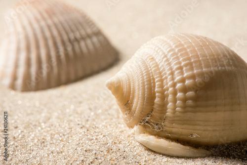 Valokuva  Conchas