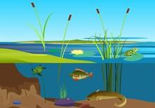 River Ecosystem Vector Illustr...