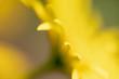 canvas print picture - Ein Hauch von gelb