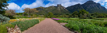 Panorama Shot Walk Way Through The Garden At Botanical Garden In Kirstenbosch Cape Town South Africa