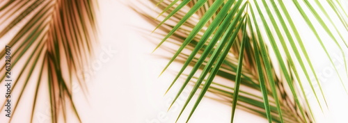 Fotomural  Banner tropical green palm leaves, branches pattern blur effect vintage toned