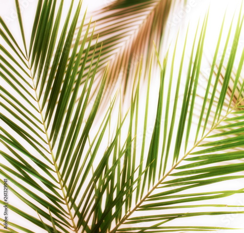 Fotografía  tropical green palm leaves, branches pattern blur effect vintage toned