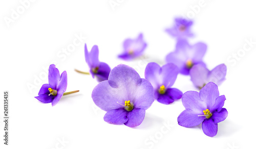 Violets on white background.