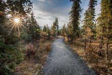 Denali National Park Path