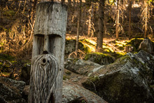 Sculpture In A Tree On Forest Path, Track To Lake Called Lago Dei Caprioli