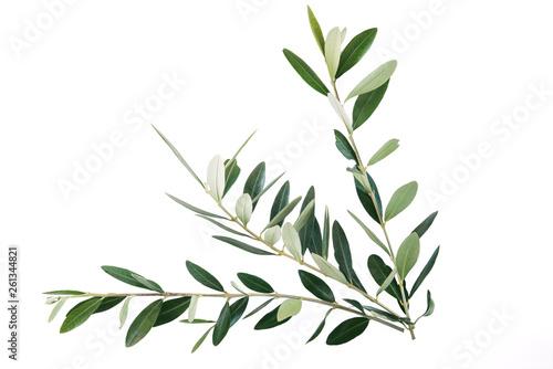 Valokuva  rami di ulivo per festa delle Palme