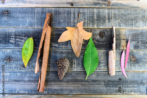 Fotografie, Obraz  Botanical still life of leaves of different sizes, shapes and colors of green, brown and red, arranged on a weathered wooden background