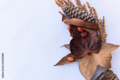 Fotografía  Botanical still life of plants, leaves, and pinecones with berries arranged on a white background