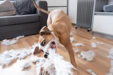 Funny Playful Dog Destroying A...