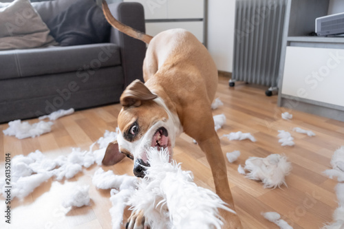 Funny playful dog destroying a fluffy pillow at home Fotobehang