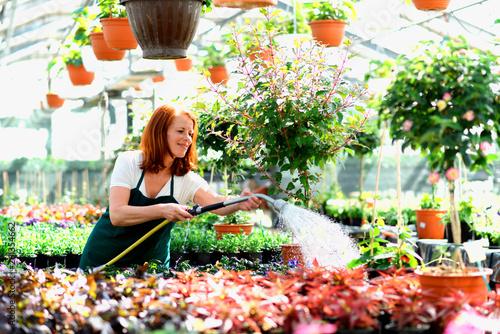 Gärtnerin gießt Pflanzen/ Blumen im Gewächshaus einer Gärtnerei // Woman waterin Wallpaper Mural