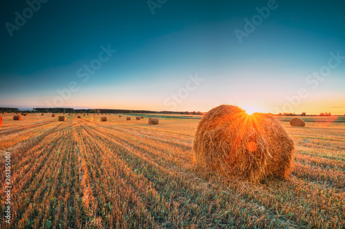 Obraz Rural Landscape Field Meadow With Hay Bales During Harvest In Sunny Evening. Late Summer - fototapety do salonu