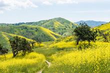 California Yellow Wild Flowers...