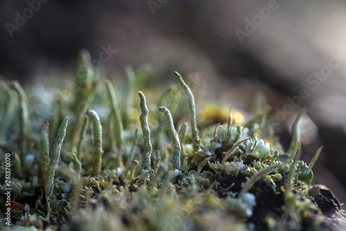 Photo Moss and lichen
