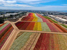 Aerial View Of Carlsbad Flower...