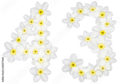 Wall Murals Plumeria Numeral 43, forty three, from natural white flowers of Daffodil (narcissus), isolated on white background