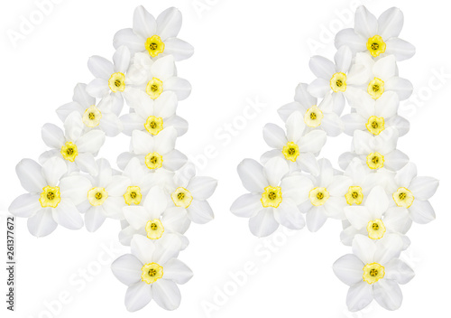 Wall Murals Plumeria Numeral 44, forty four, from natural white flowers of Daffodil (narcissus), isolated on white background