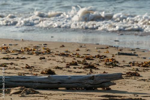 Fotografia  Ein Ast liegt an einem Sandstrand in der Sonne während im Hintergrund die Brandu