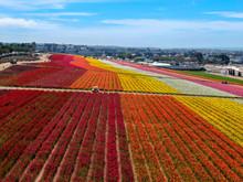 Aerial View Of Carlsbad Flower...
