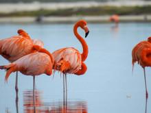 Pink Flamingo Mexico