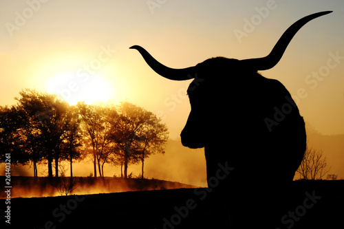 Fototapeta Texas Longhorn cow silhouette with scenic sunrise on landscape in background