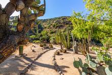 Cacti And Tropical Trees, Wrigley Botanical Gardens & Memorial On Catalina Island, California.