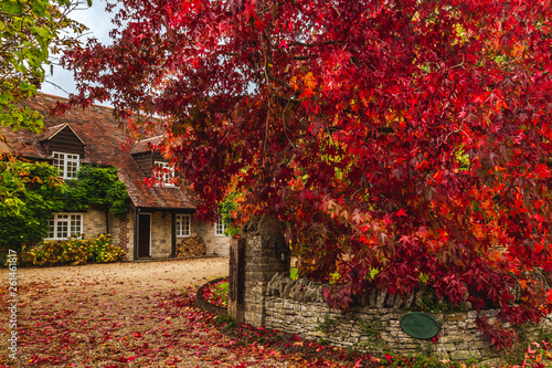 Poster Trees Rural cottage terrace with autumnal trees