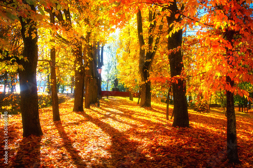 Autumn scene. Bright colorful landscape yellow trees in autumn park. Fall
