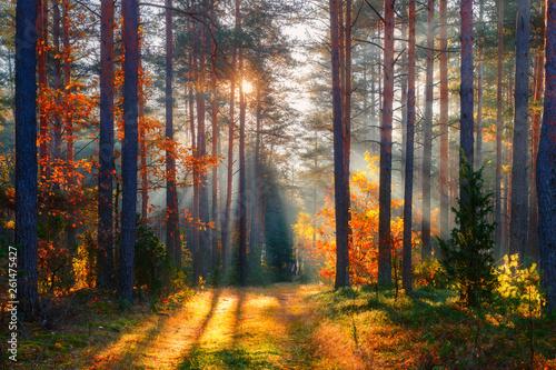 Garden Poster Natural Park Fall forest