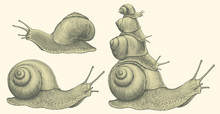 Snails. Design Set. Hand Drawn Engraving. Editable Vector Vintage Illustration. Isolated On Light Background. 8 EPS
