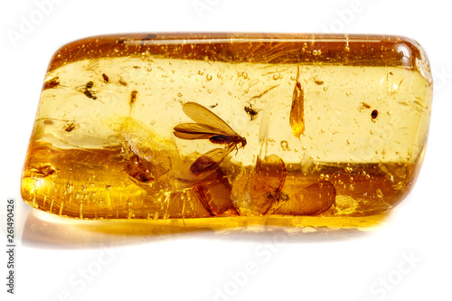Photographie Macro stone mineral amber with insects, flies and beetles on a white background