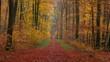 Forest track in autumnal woodland Freudenburg Rhineland-Palatinate Germany