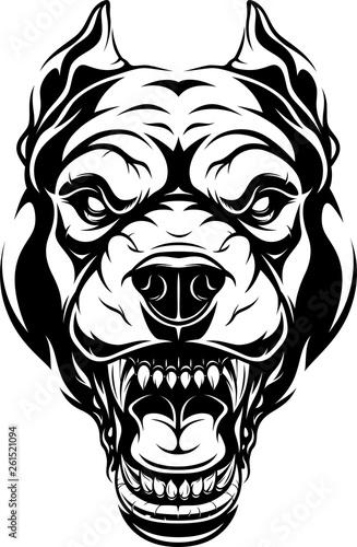 Photo Ferocious pitbull dog head