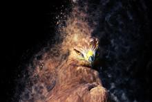 Bird Of Prey. Bird Portrait. Dispersion, Splatter Effect. Black Background.