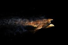Flying Wild Bird. Bird Of Prey. Dispersion, Splatter Effect. Black Background.