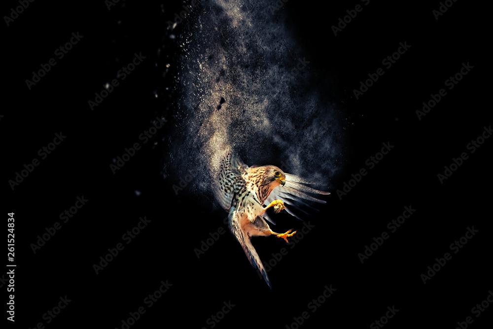 Fototapety, obrazy: Flying bird. Bird of prey. Dispersion, splatter effect. Black background.